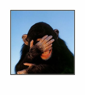 Embarrassed-Chimpanzee-Pre-Matted-C11774369