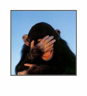 Embarrassed-Chimpanzee-Pre-Matted-C11774369